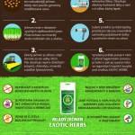 Ječmen není jen na pivo – Infografika