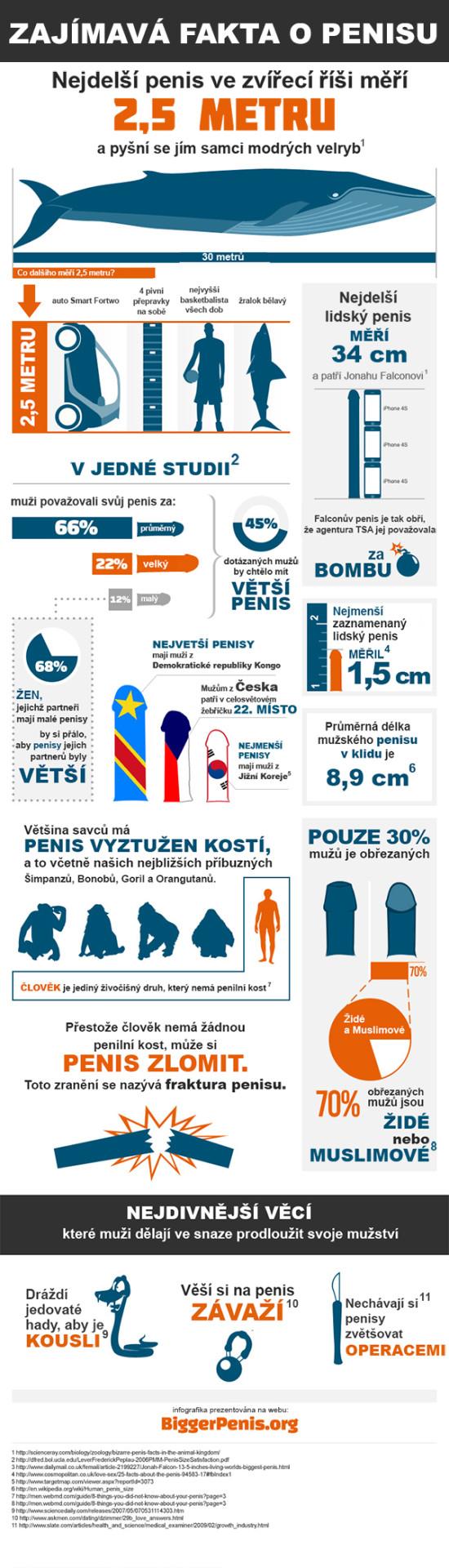 fakta_o_penisu-infografika