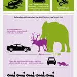 Jak na výhodné povinné ručení – Infografika