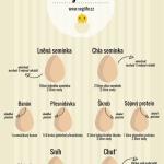 Veganské alternativy vajíček – Infografika