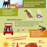 Zvířata v autě – infografika